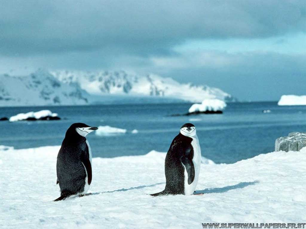 Pingouins2001