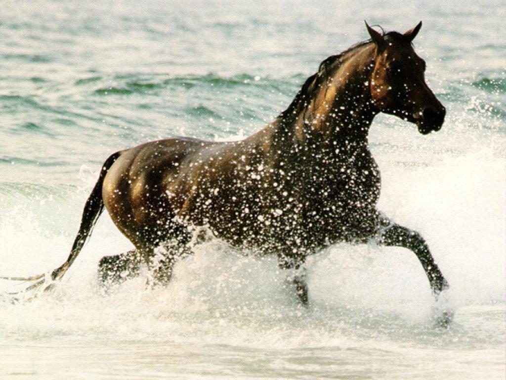 chevaux%2001